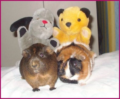 Clover and Peachy with their two other friends, Sooty and Sweep